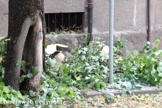 Abbattimento tigli in via Lorenzo da Viterbo
