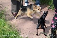 Parco a santa Barbara, manifestano pure i cani