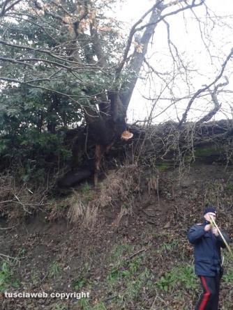 Maltempo - Incidente sulla Onanese