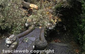 Albero cade sulla fontana del Gambero