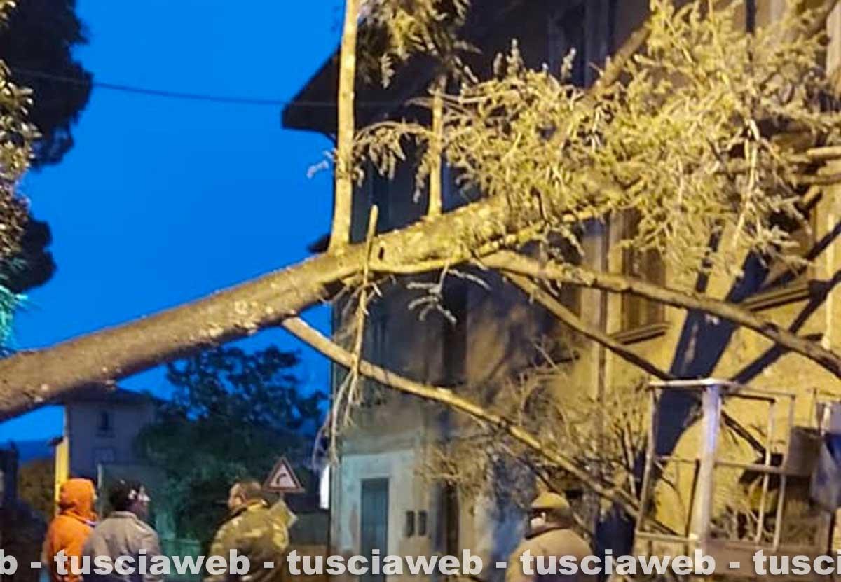 Vetralla - Crolla un grande albero e va sbattere su una casa