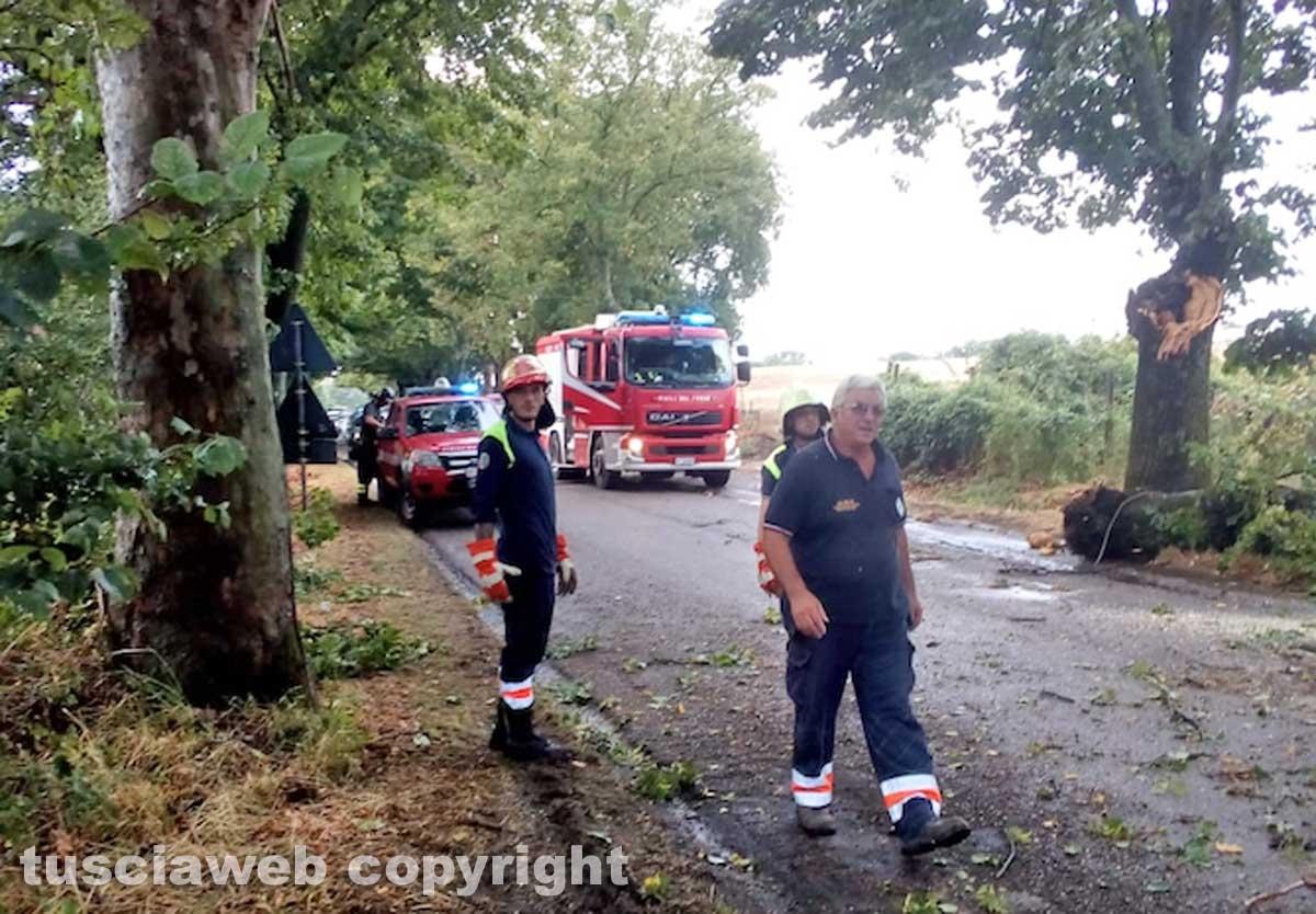Montefiascone - Albero spezzato sulla Verentana