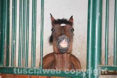 Allevamento degli Assi - I cavalli e i cavalieri