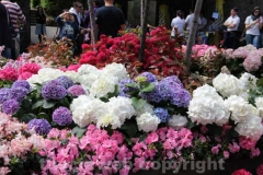 San pellegrino in fiore