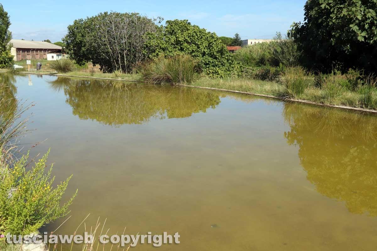 Bullicame - La grande vasca
