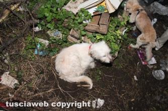 Viterbo - Cantina in fiamme, morti otto cani