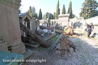 Tombe distrutte e alberi divelti