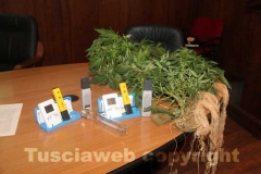 Le piante di marijuana e i termostati sequestrati