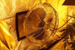 Un ventilatore in azione