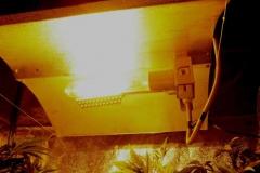 Le lampade in azione