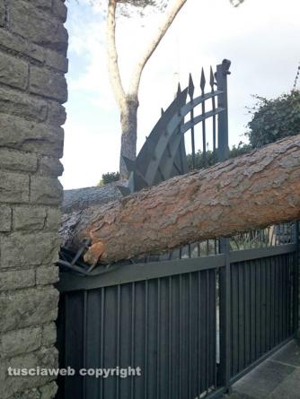 Cimina - Albero crolla su un cancello