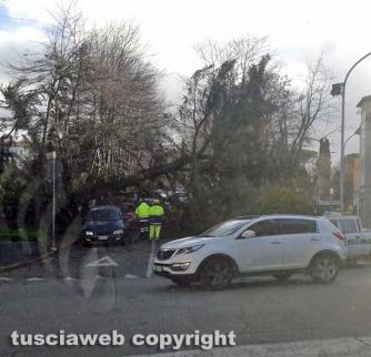 Viterbo - Albero crollato a via Vicenza
