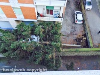 Viterbo - Quartiere Ellera - Pino si abbatte su un furgone bianco