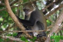 Una scimmietta