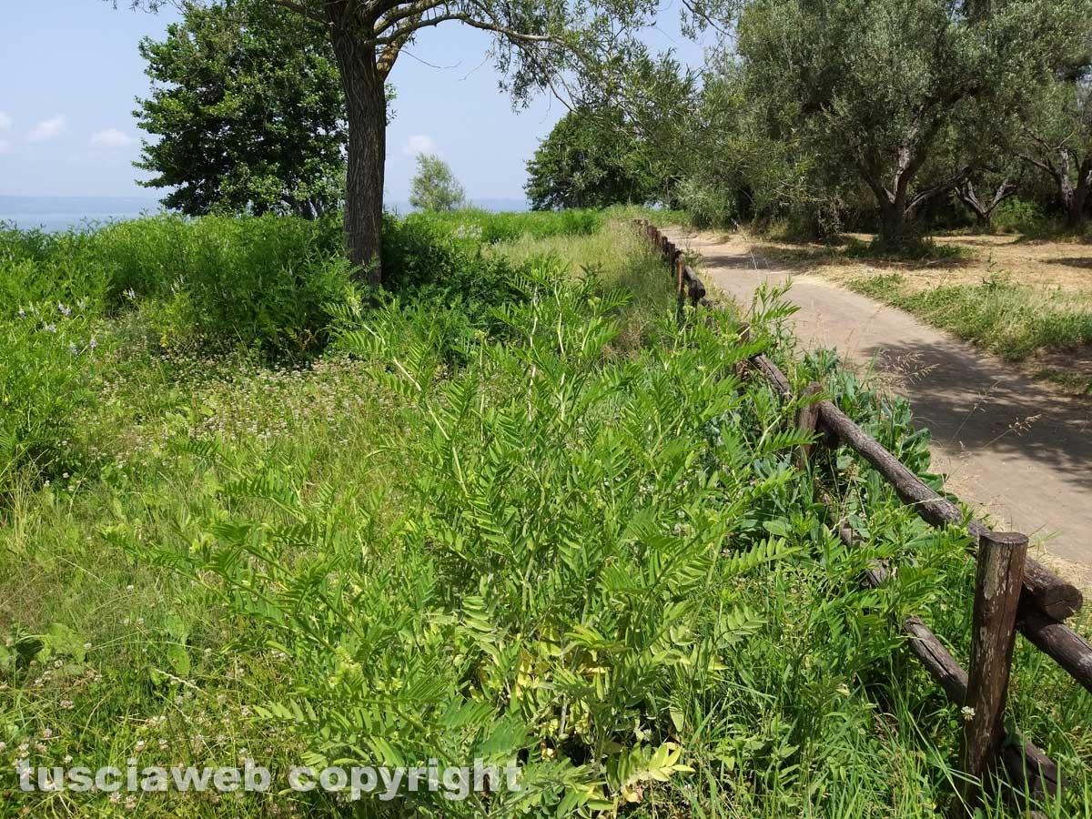 Le erbacce sul lungolago di Montefiascone