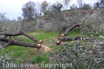 Farnese - Devastato il terreno dell\'ex sindaco  Pomarè