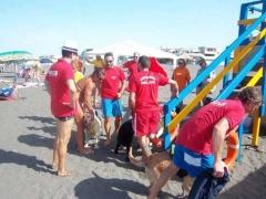 Dimostrazione in acqua dei cani bagnino del Nucs, Nucleo unità cinofile salvataggio della prociv Vulci 1 di Montalto di Castro