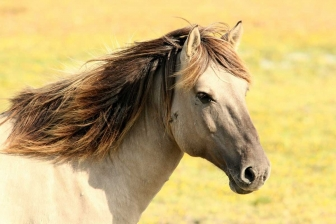 Gli animali più belli del mondo