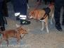Gruppo cinofilo protezione civile Viterbo Tuscia