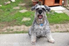 Otto, il cane della famiglia Chiodo