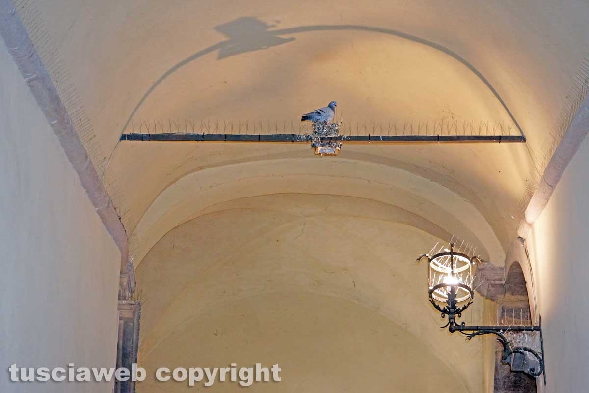 I due piccioni di Palazzo dei Priori
