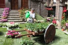 Tornano i fiori a San Pellegrino