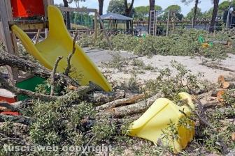 Il leccio caduto sul parco dei bambini