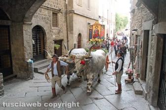 Viterbo - Il santissimo Salvatore tra le vie del centro