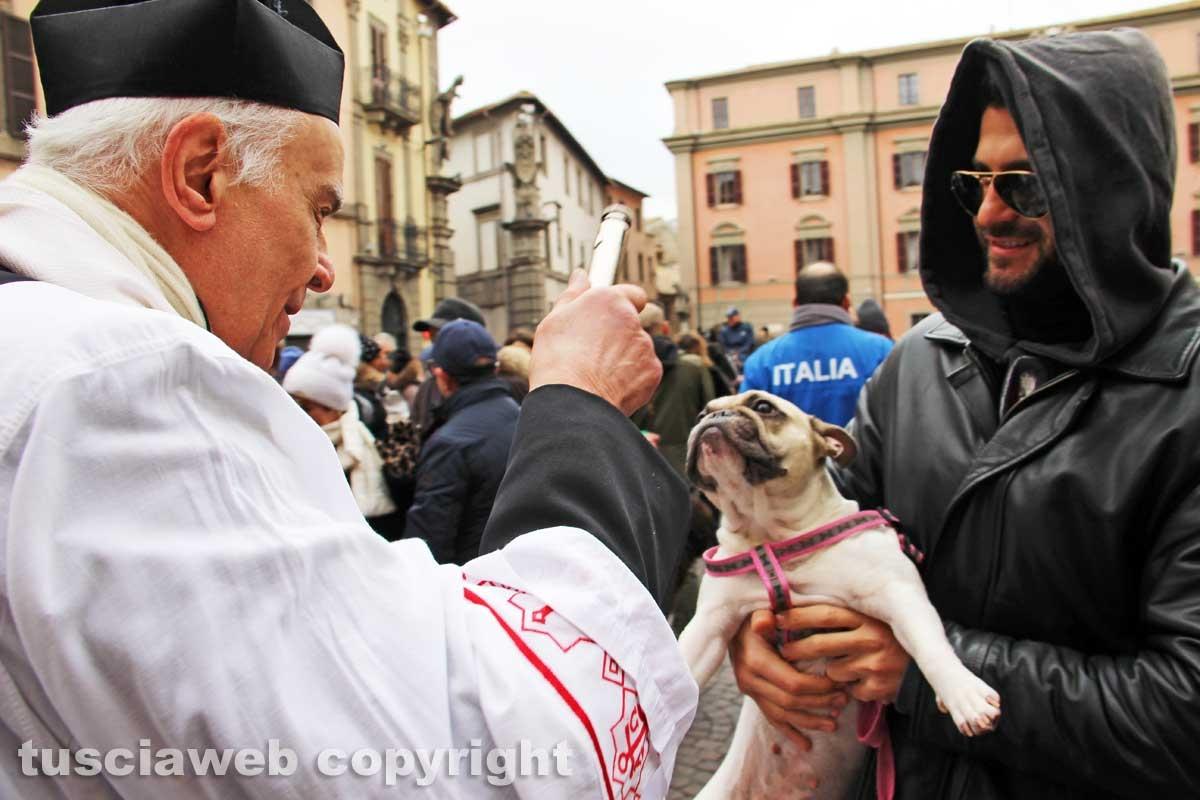 La benedizione degli animali