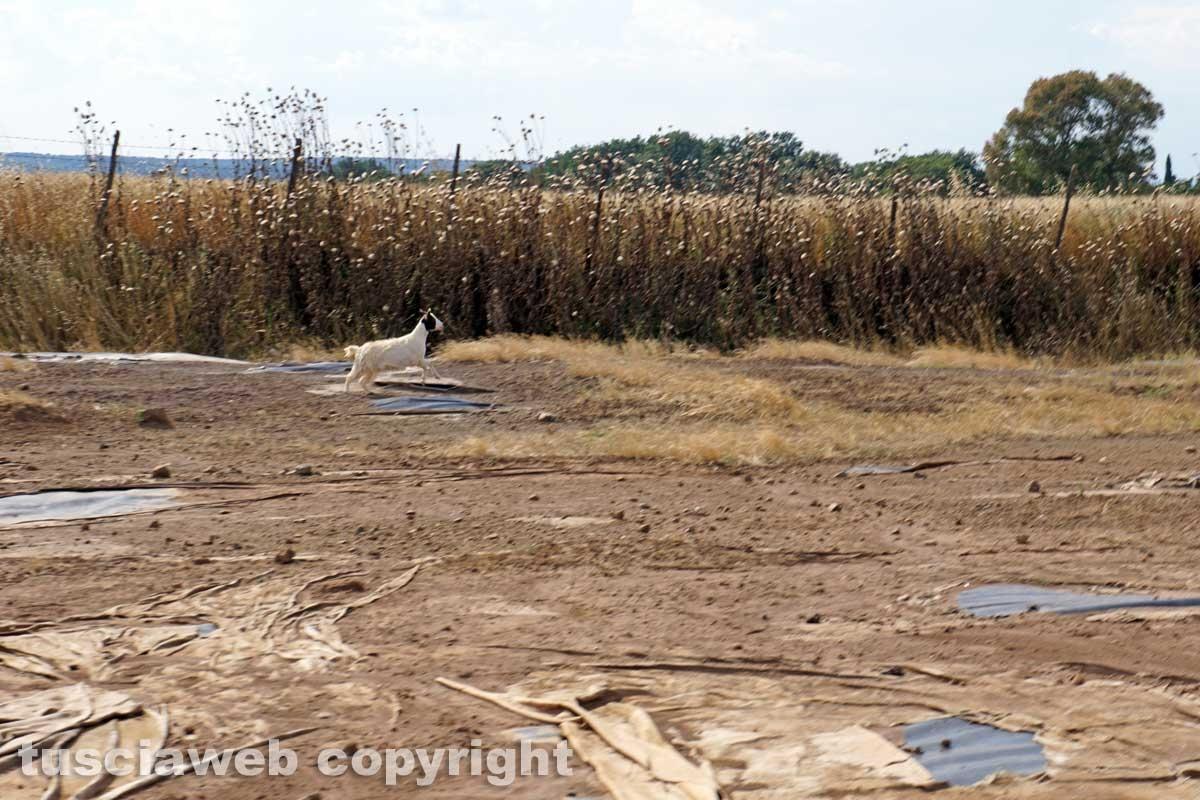 La bomba ecologica della discarica del Cinelli