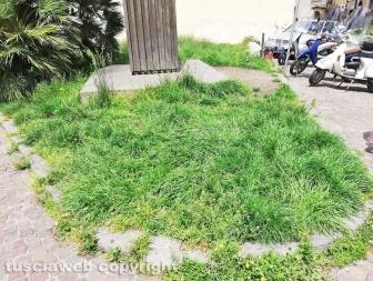 La città invasa dall'erba