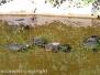 Le tartarughe di pratogiardino
