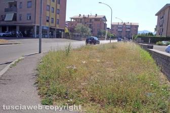 L'erba da nord al centro