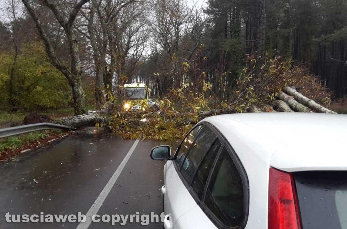 L'albero caduto sulla Cassia Cimina, dopo lo svincolo per Canepina