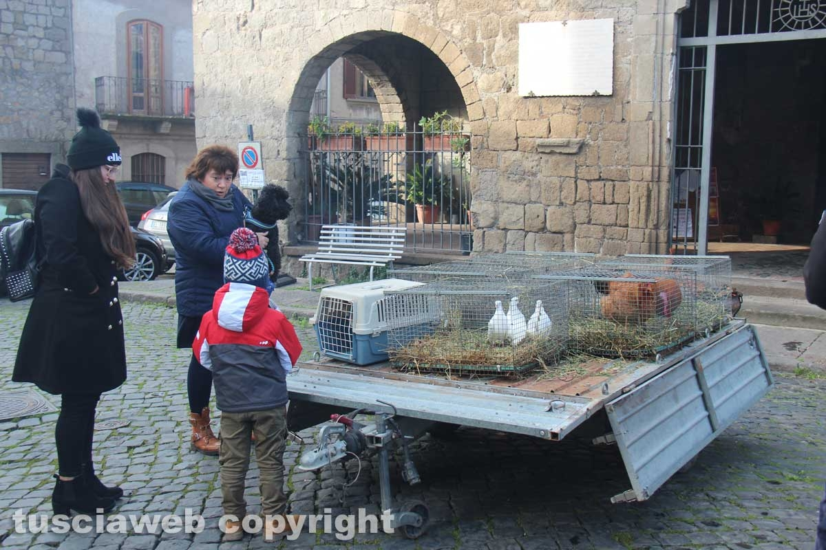 Sant'Antonio, la benedizione degli animali