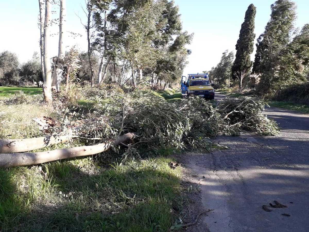 Tarquinia - Albero caduto sulla Litoranea