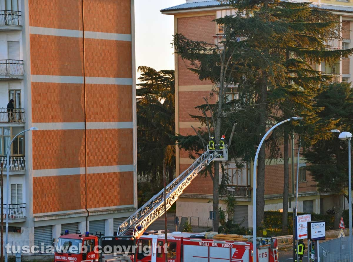 Viterbo - Rami caduti in via Villanova - Foto di Umberto Montrezza