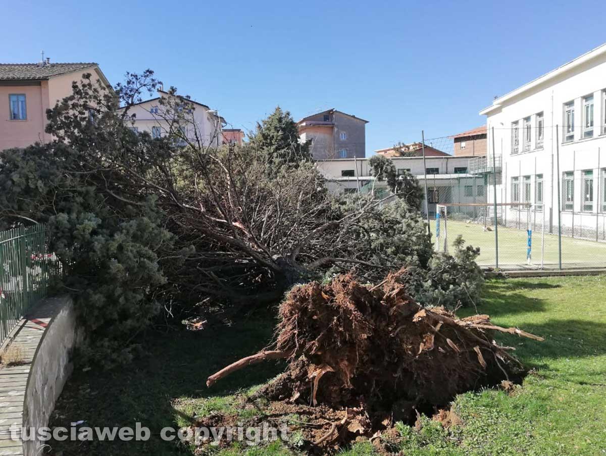 Viterbo - Albero crollato alla scuola di Bagnaia
