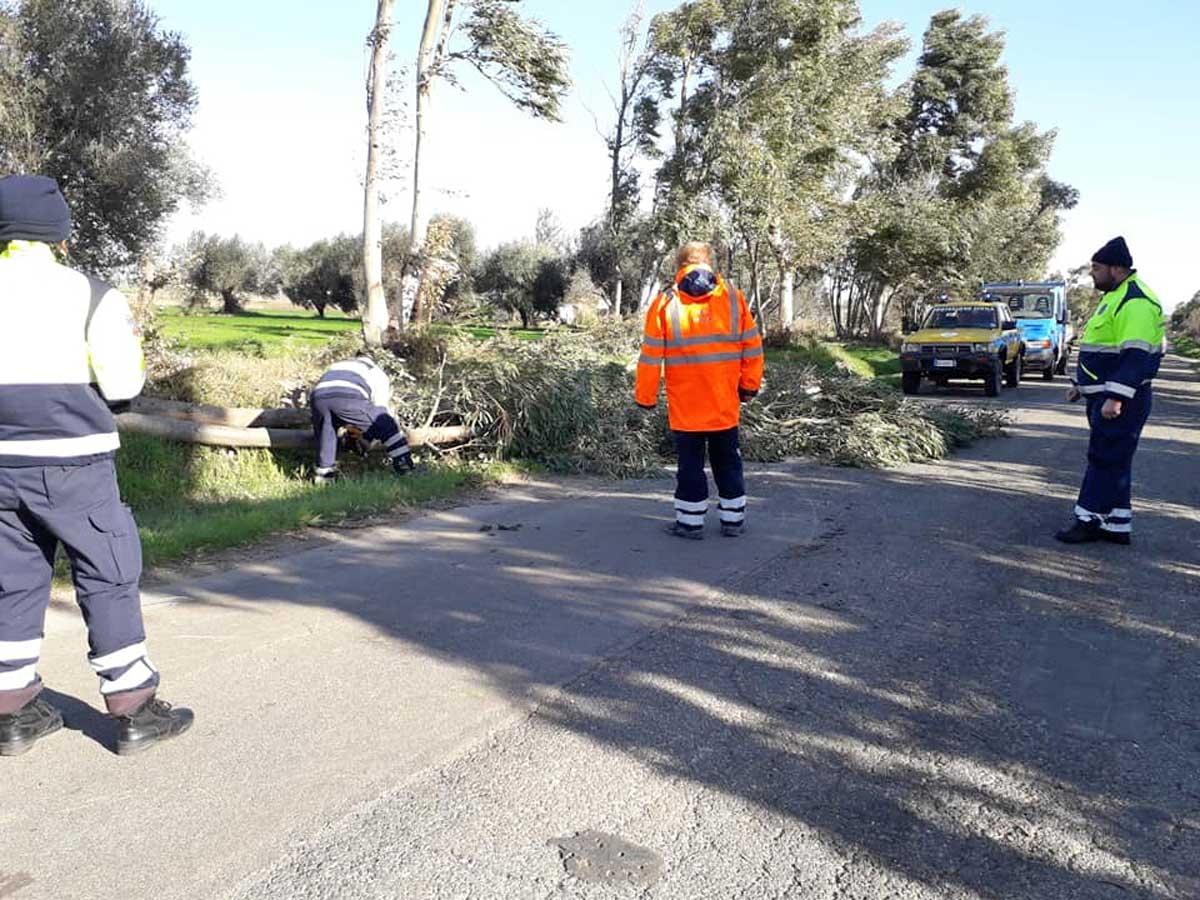 Tarquinia - Albero caduto - Volontari Aeopc al lavoro