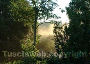 La nuvola di polvere nei pressi della riserva naturale del lago di Vico