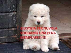 Nuvola cucciolo, nella foto inviata dall'associazione