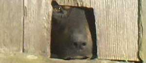 Il rottweiler rinchiuso
