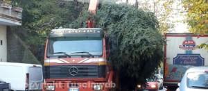 Il passaggio dell'albero di Natale