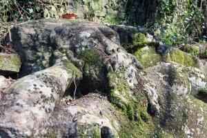Viterbo - Riscoperta la misteriosa villa di Madonna Cornelia -  Il dio delle acque