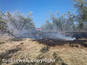 Incendio di sterpaglie - Vigili del fuoco in azione