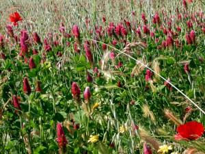Campo fiorito al Parco Valle del Treja