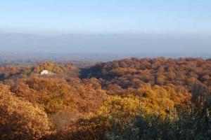 Vallerano - I castagneti in autunno