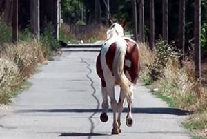 Un cavallo in fuga