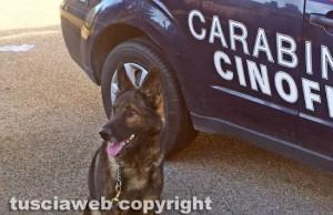 Carabinieri - Una unità cinofila
