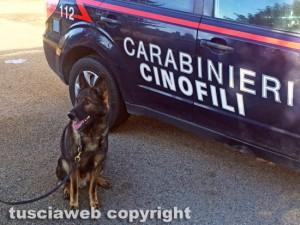 Carabinieri - Unità cinofila